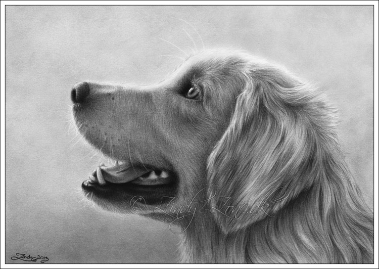 golden retriever dog drawing zindy ink tattoo artist illustrator. Black Bedroom Furniture Sets. Home Design Ideas